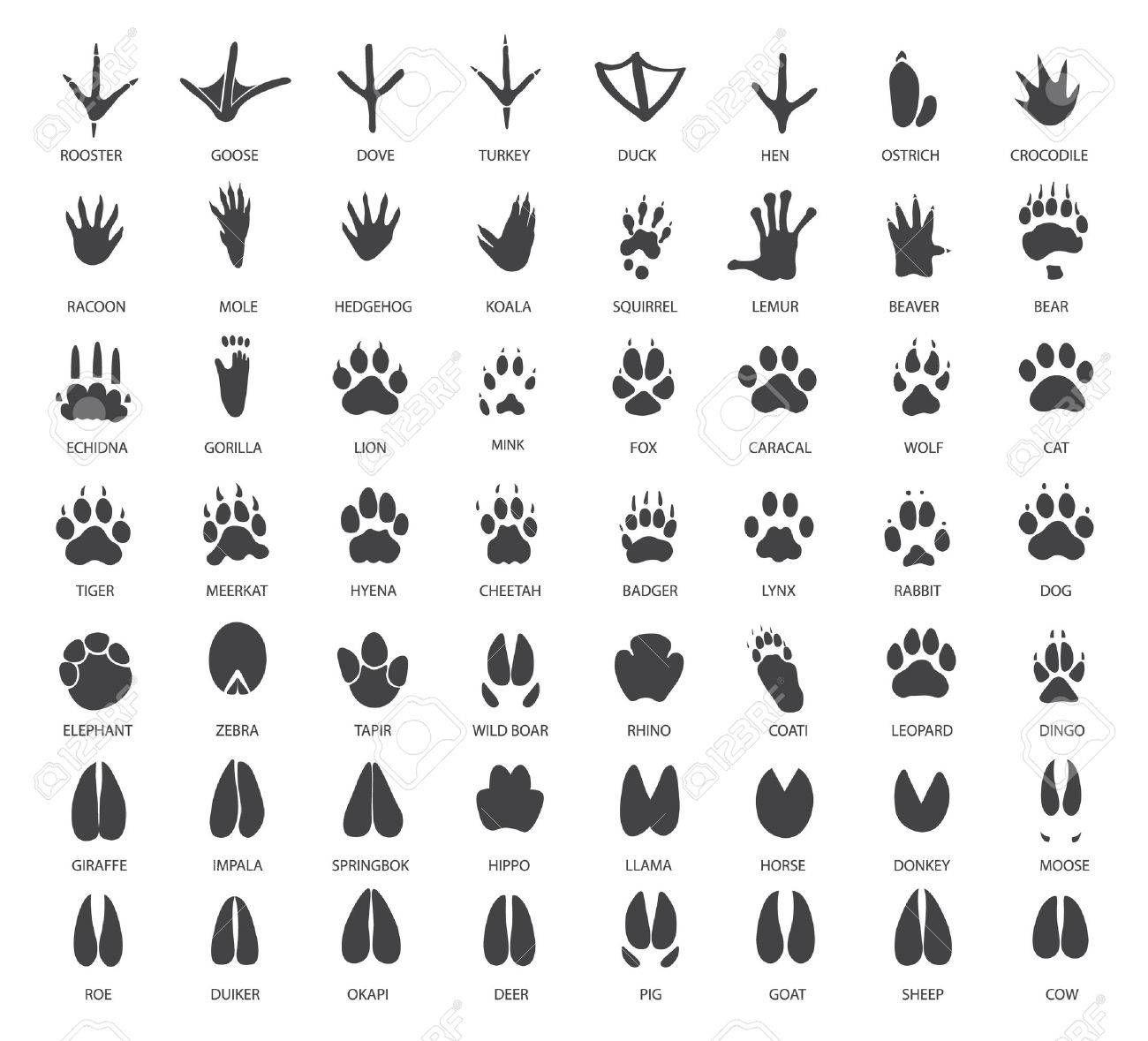 Vector Set Of Animal Tracks Affiliate Set Vector