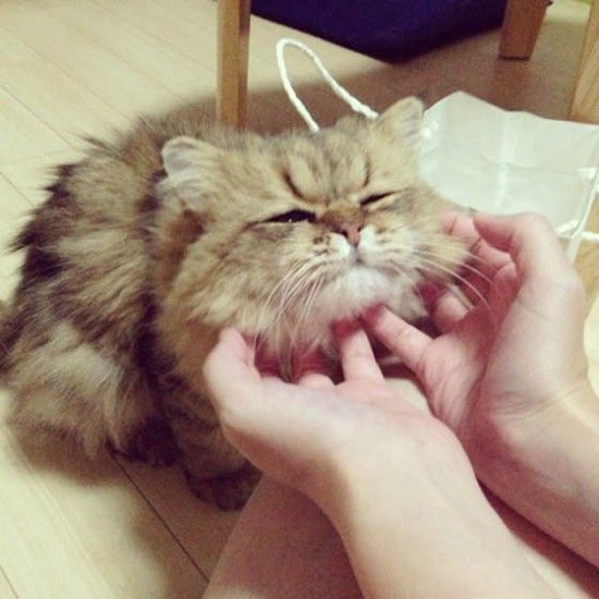 "foo chan the cat | Foo chan:日本版的""臭脸猫Tard"" 表情 猫 日本 忧郁 ..."