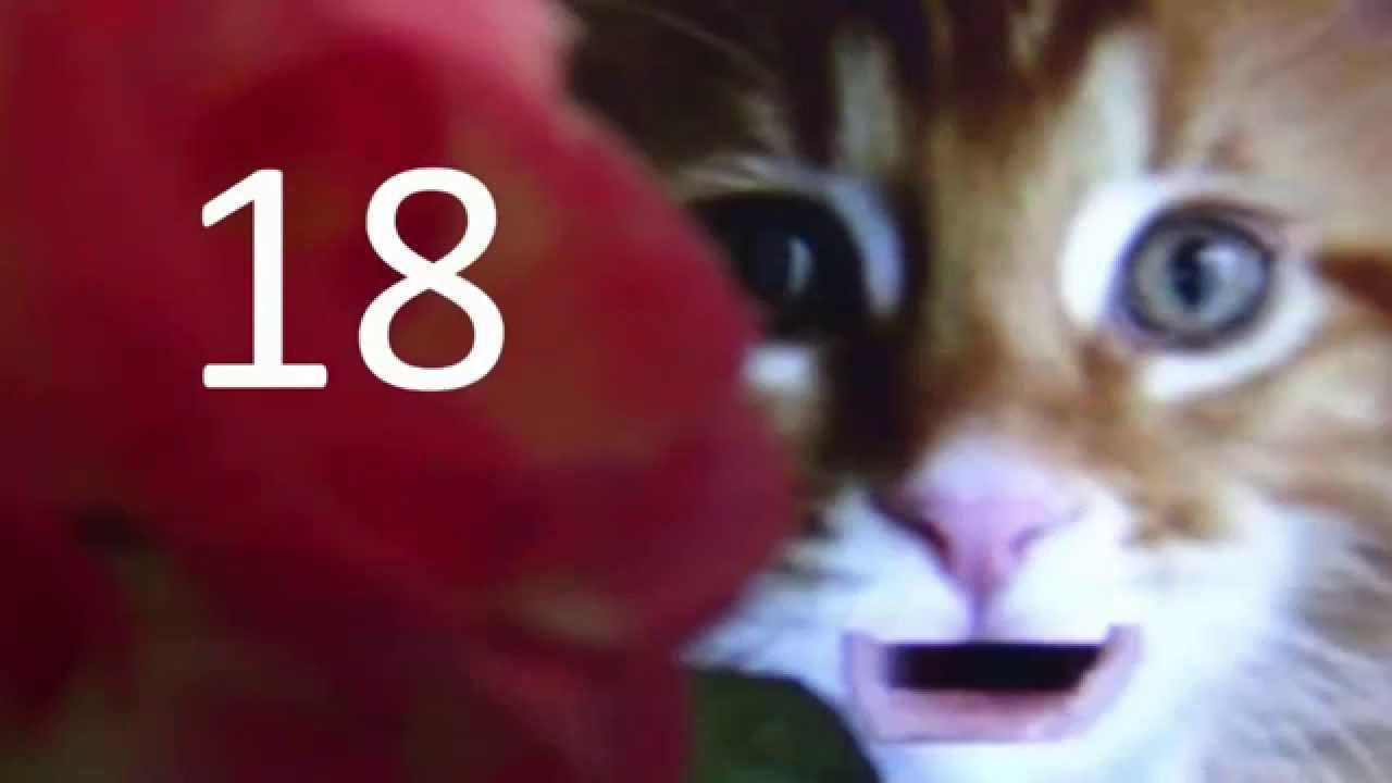 Happy 18th birthday wishes message with funny cute cat video – Happy Birthday Greetings Video