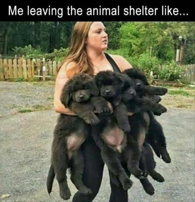 Daily Afternoon Funny Picdump 1 36 Photos Funnymemes Funnypictures Humor Funnytexts Funnyquotes Funnyanimals Funny Lol Haha Memes Entertainment