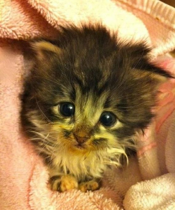 Innocent Kitty | Community Post: The Best Of Cutest Paw