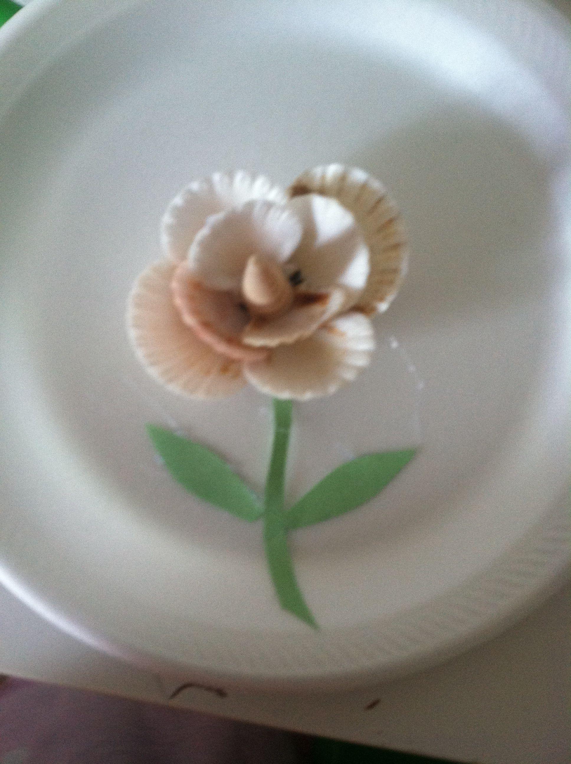 Flor Hecha Con Conchas De Mar Manualidades Pinterest Shells - Fotos-de-conchas-de-mar