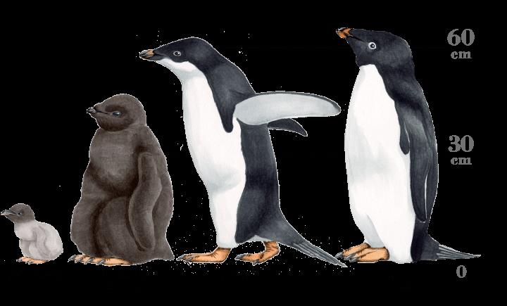 img_penguin_detail_header_img.png (720×435)