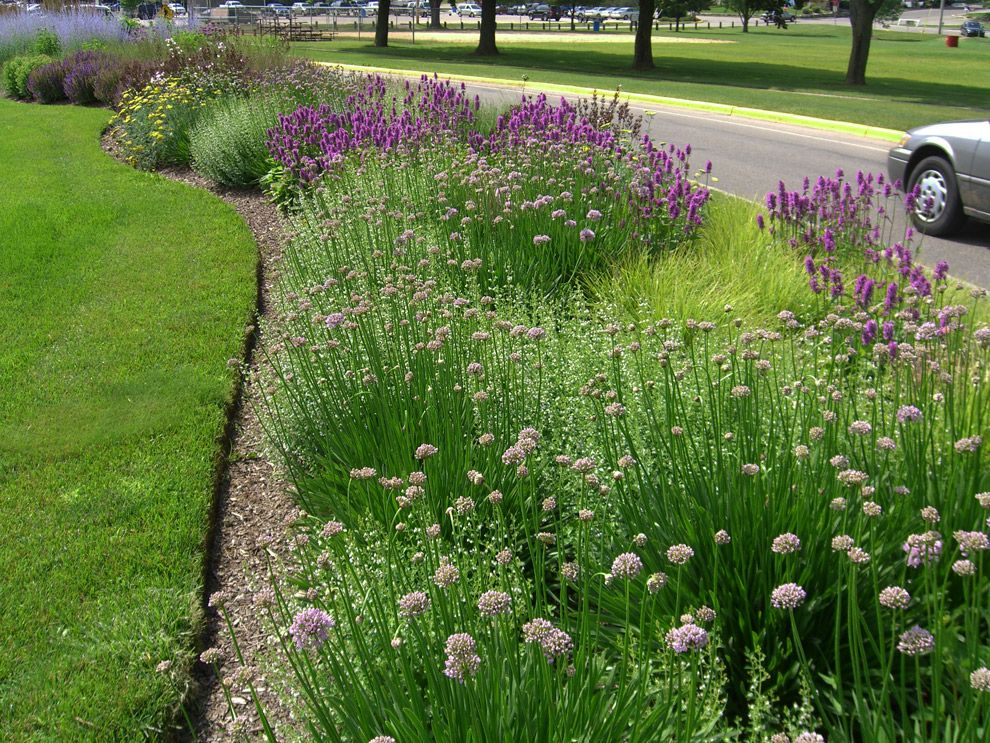 Pin By Southern Guide To Life On Natural Landscape Water Wise Landscaping Michigan Gardening Xeriscape