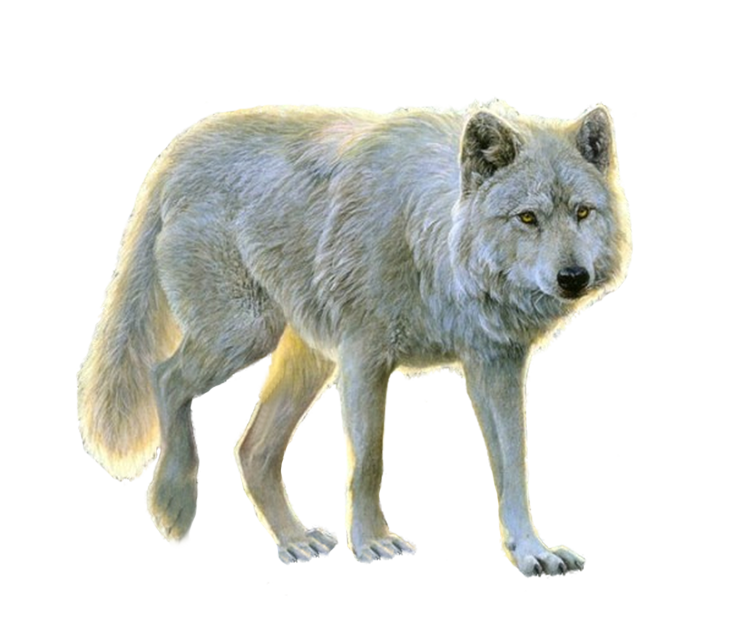 Wolves Of The Wild R 1 Png Animated Animals Animals Images Animals