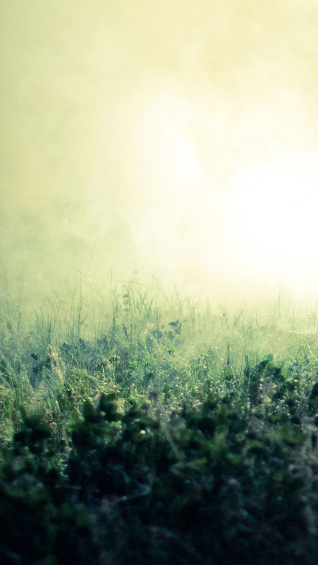 Pure Simple Mist Grass Field Bokeh Background Iphone 6 Wallpaper