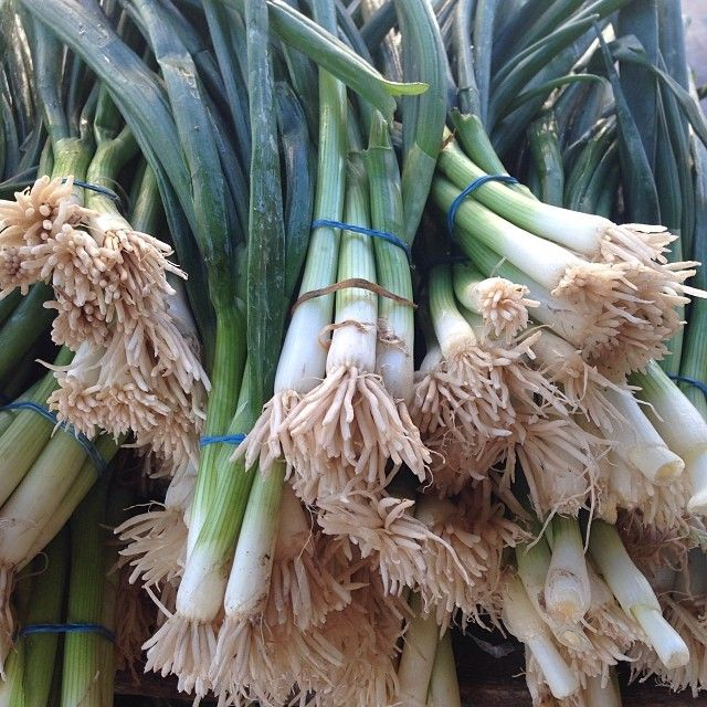 Bunches of #scallions at Union Square greenmarket in #Manhattan #farmersmarketnyc