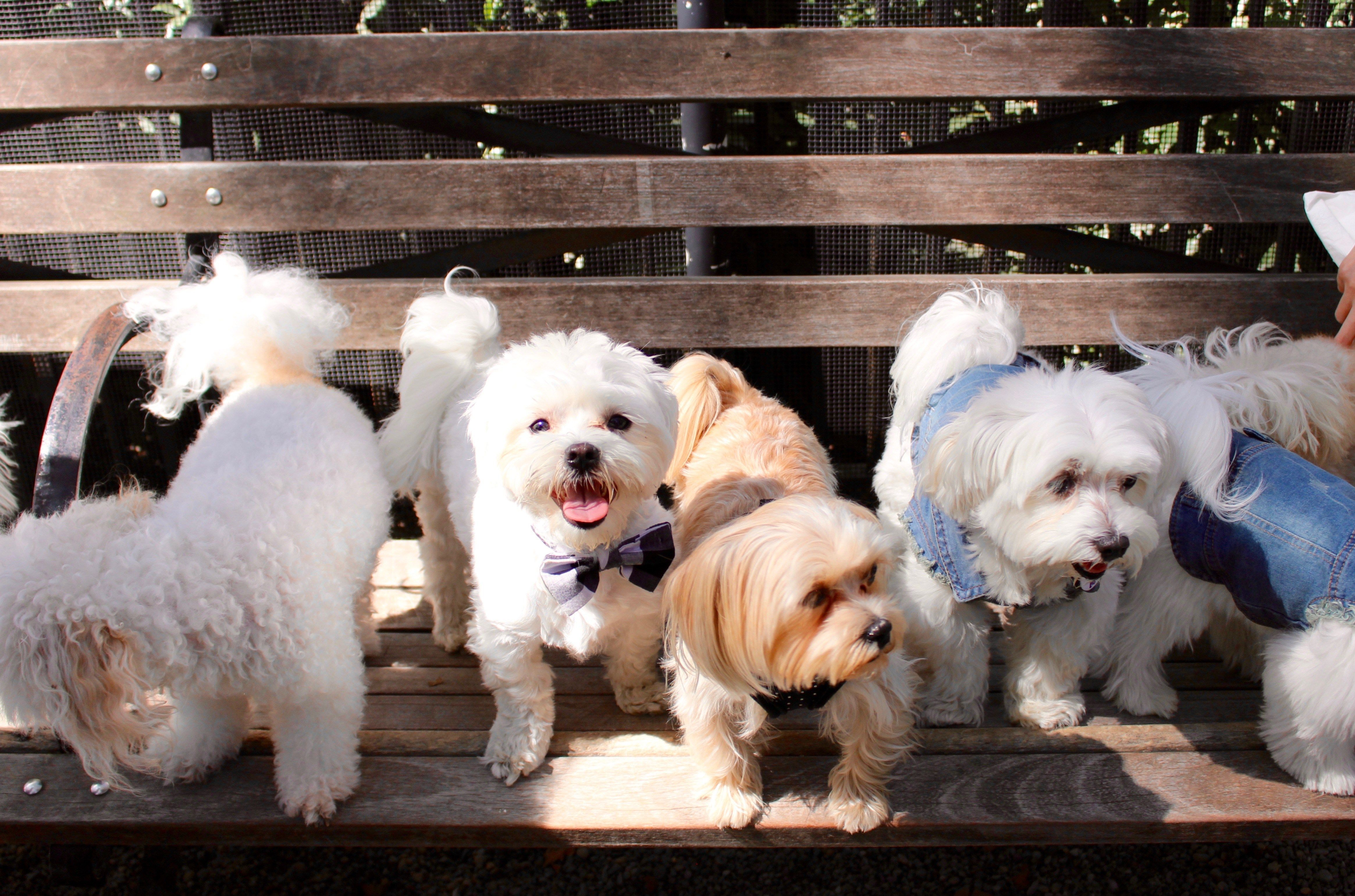 Tucker The Maltese S Guide To New York City Blog Projects New