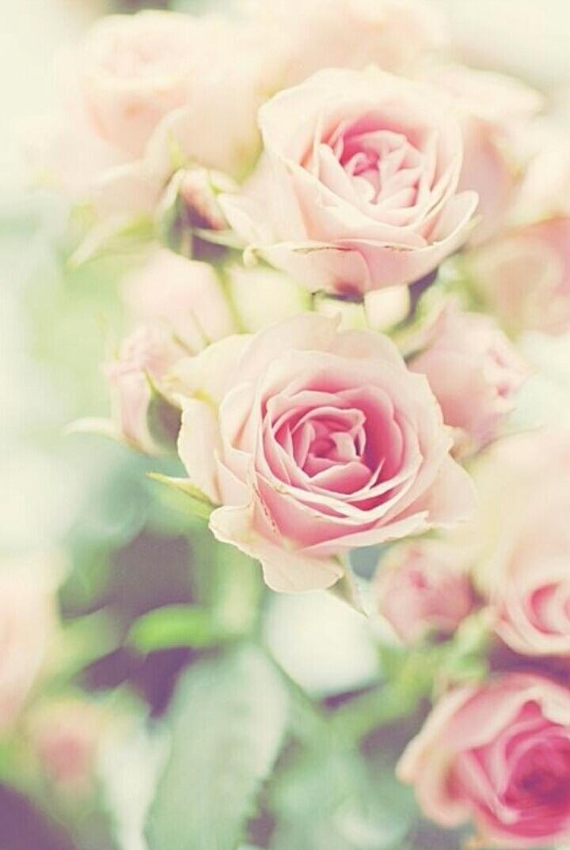 Resultado De Imagem Para We Heart It Hd | Roses | Pinterest | Wir ... Schnittblumen Frische Strause Garten