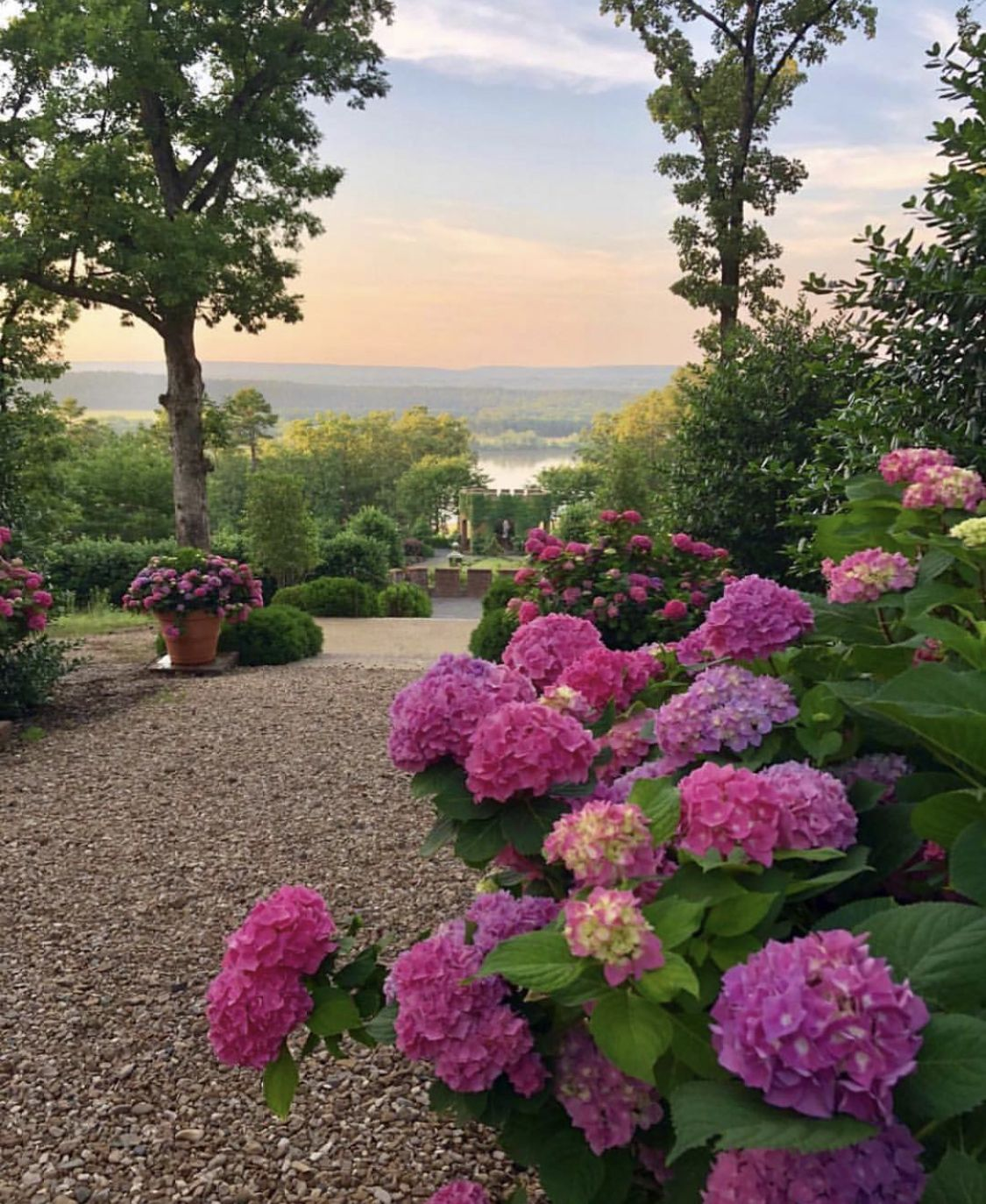 Hydrangeas With That View Garden Images Beautiful Gardens Plants