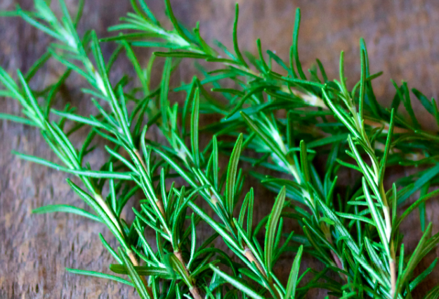 15 Natural Mosquito Repellent Plants Natural Mosquito