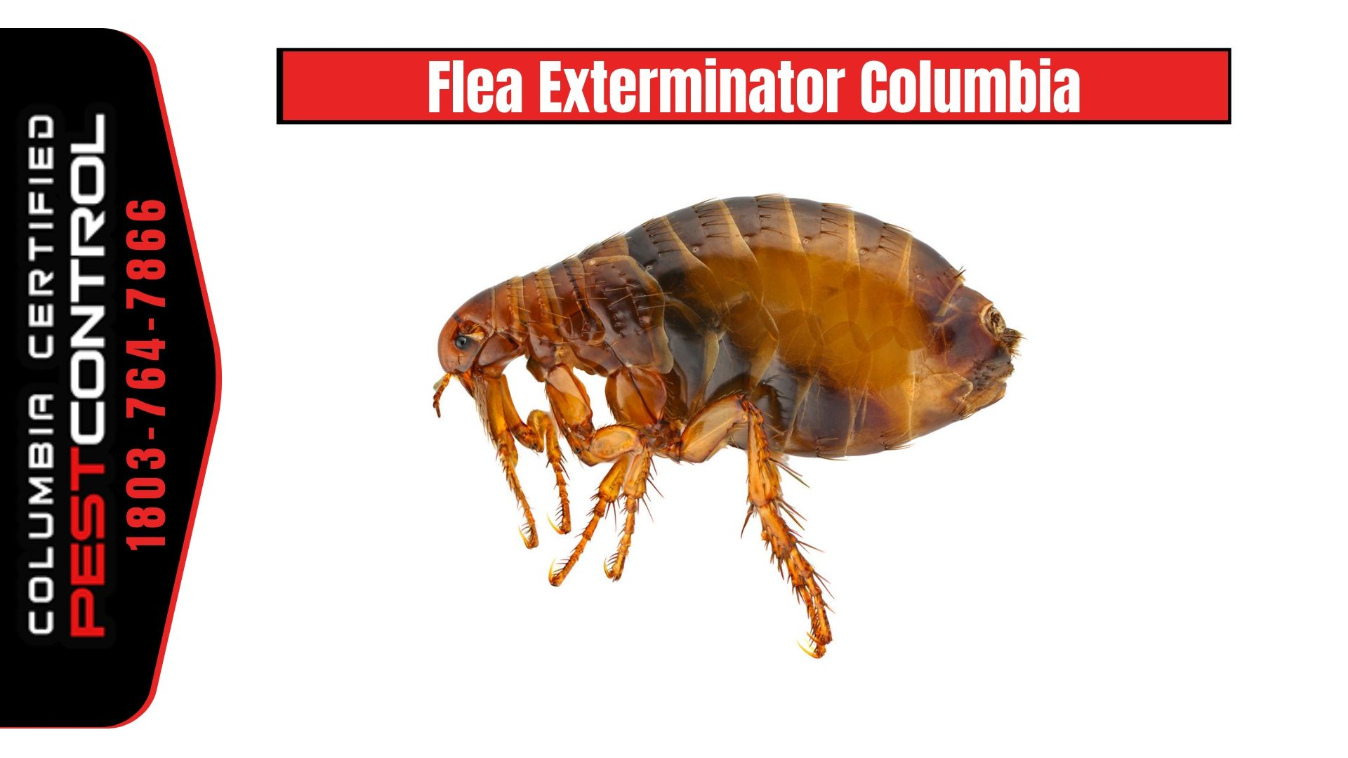 We Understand That Customers Are Looking For Home Pest Control Service With 100 Satisfaction At Columbia Certified Pest Cont Pest Control Fleas Flea Pest Control