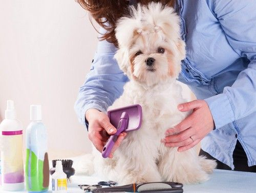 Dog Grooming Supplies 101 The Ultimate Buyers Guide Top Dog Tips Dog Grooming Dog Grooming Salons Dog Grooming Supplies