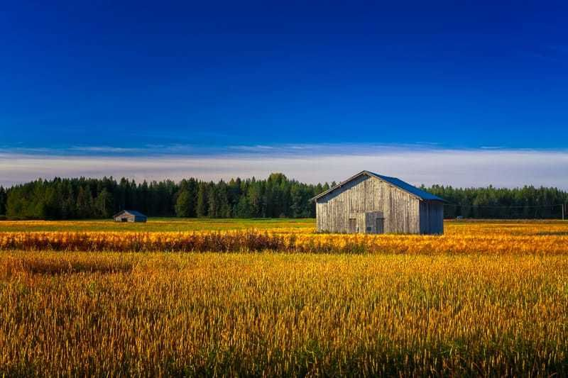Two Old Barns On An Autumn Field