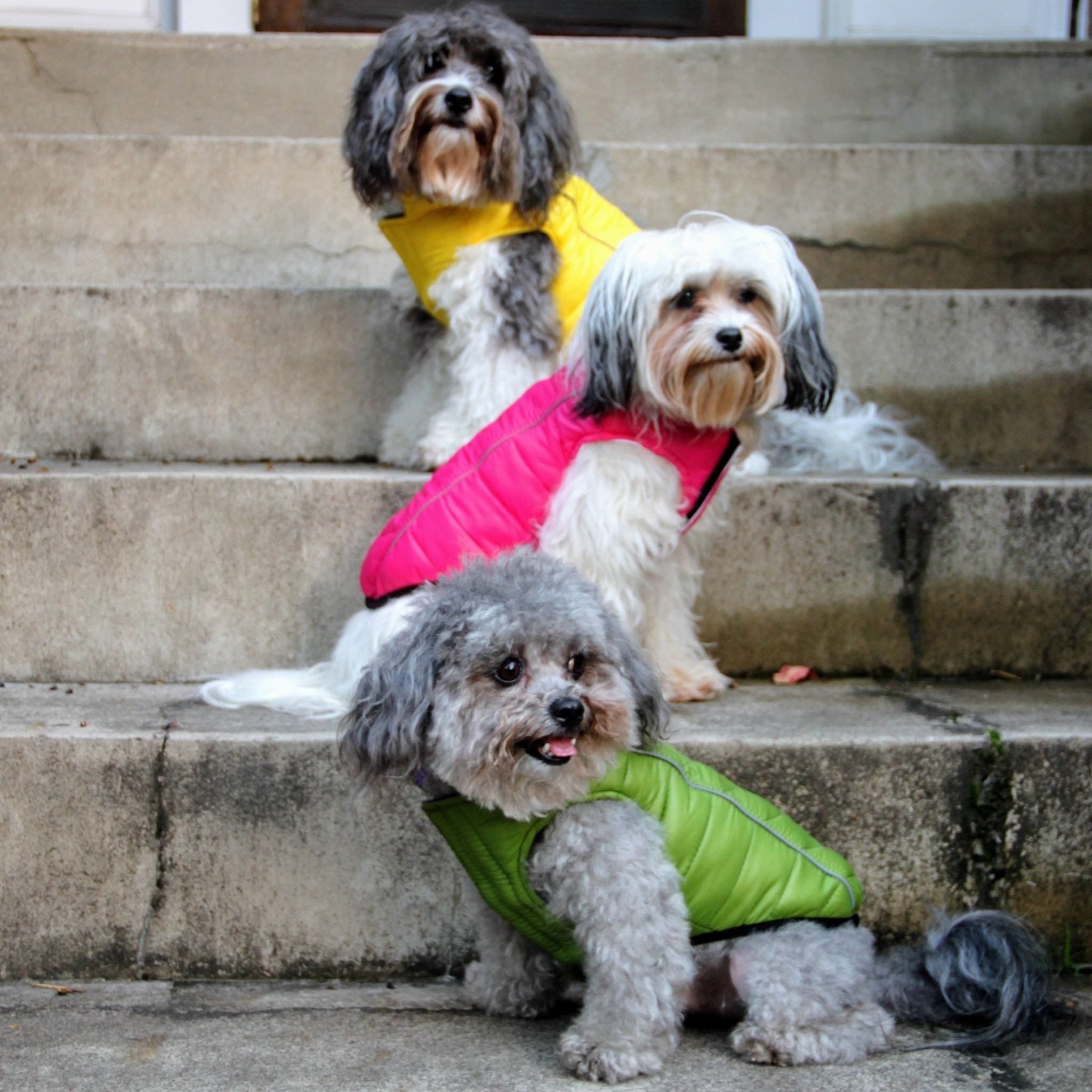a607ebe44c99b Hip Doggie Featherlite Puffer Vests for dogs look and feel just like the puffer  jackets so popular with humans. They are soft, light and reversible, ...