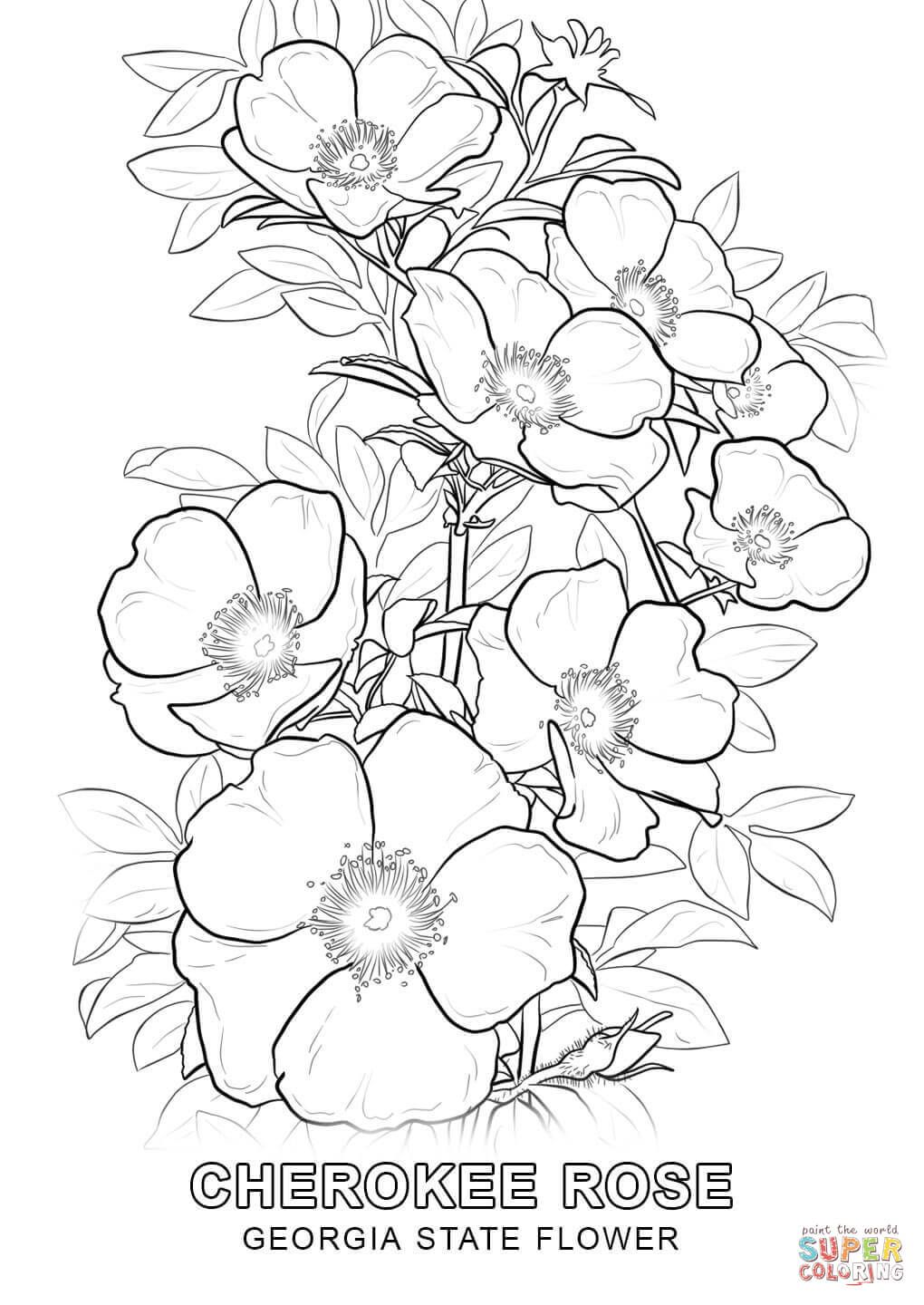 Georgia State Flower Coloring Page Free Printable Coloring Pages