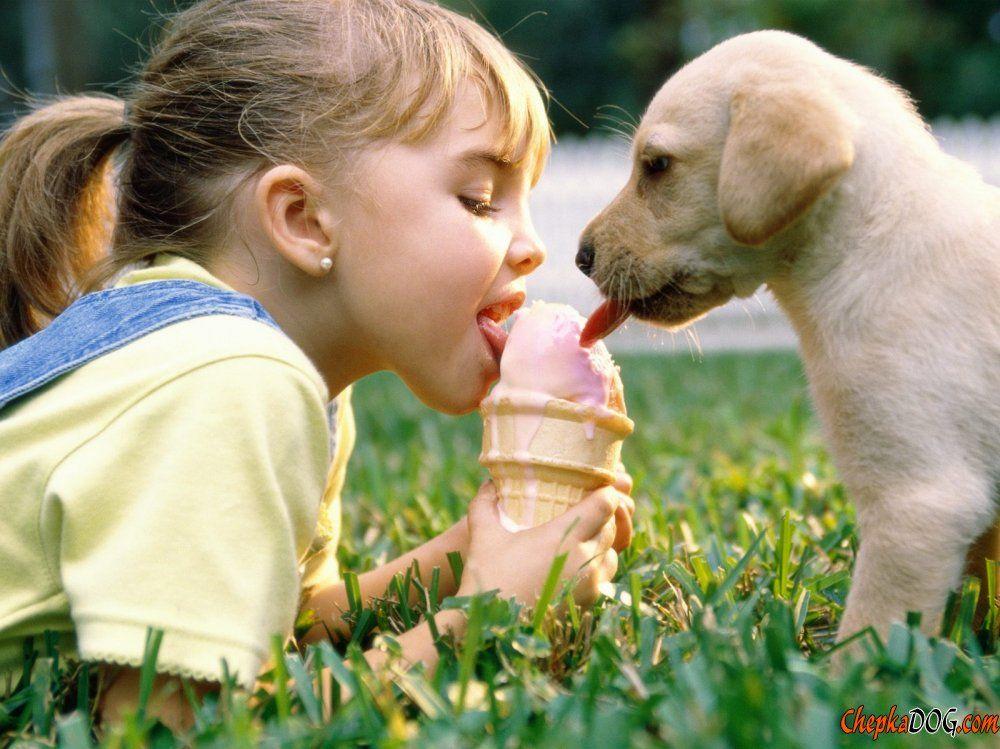 Los perros y los niños son siempre amigos fotos