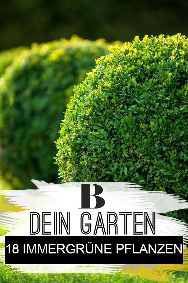 18 immergrüne Pflanzen für deinen Garten #immergrünesträucher
