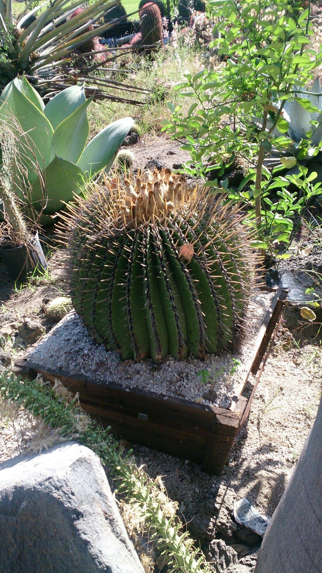 Pin by nahui ollin on Plantas y cactus