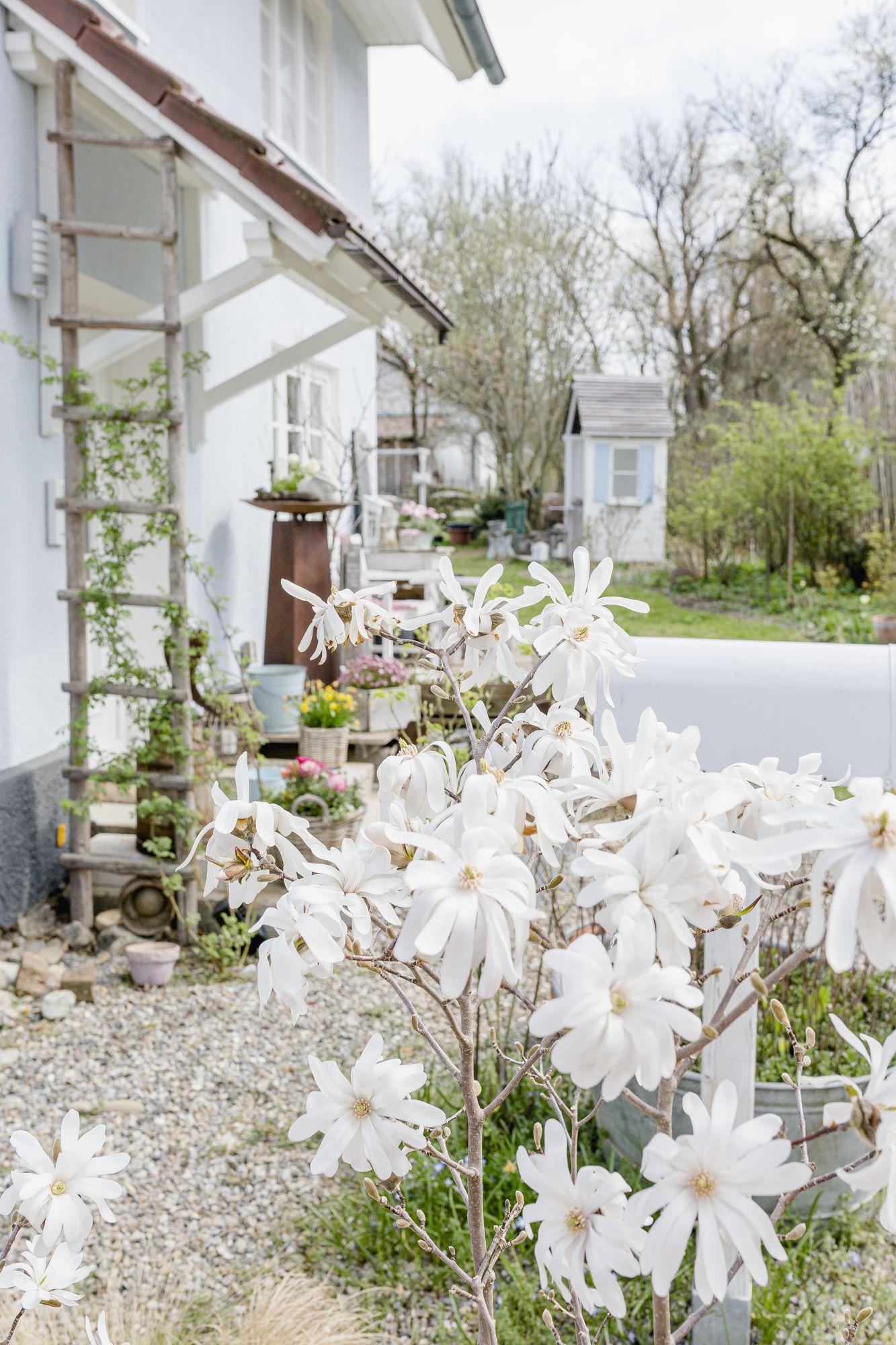 Weltbester Zitronensirup Oder Gartengluck Wahrend Corona Pomponetti Rezept In 2020 Garten Vorgarten Wohnen Und Garten