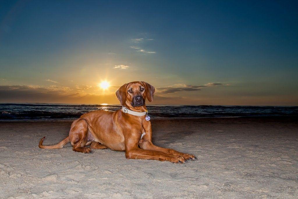 Hundefotografie Im Markischen Kreis Und Nrw Diana Klee