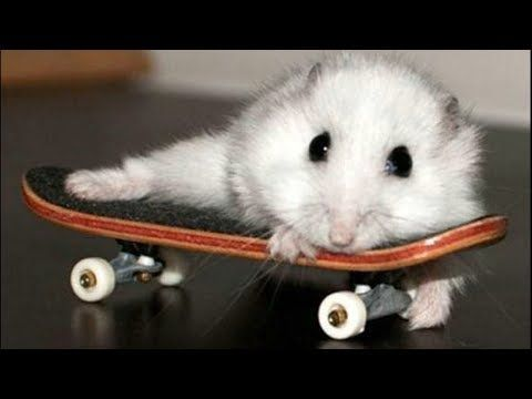 Funny Hamsters Videos Compilation 4 Cute And Funniest