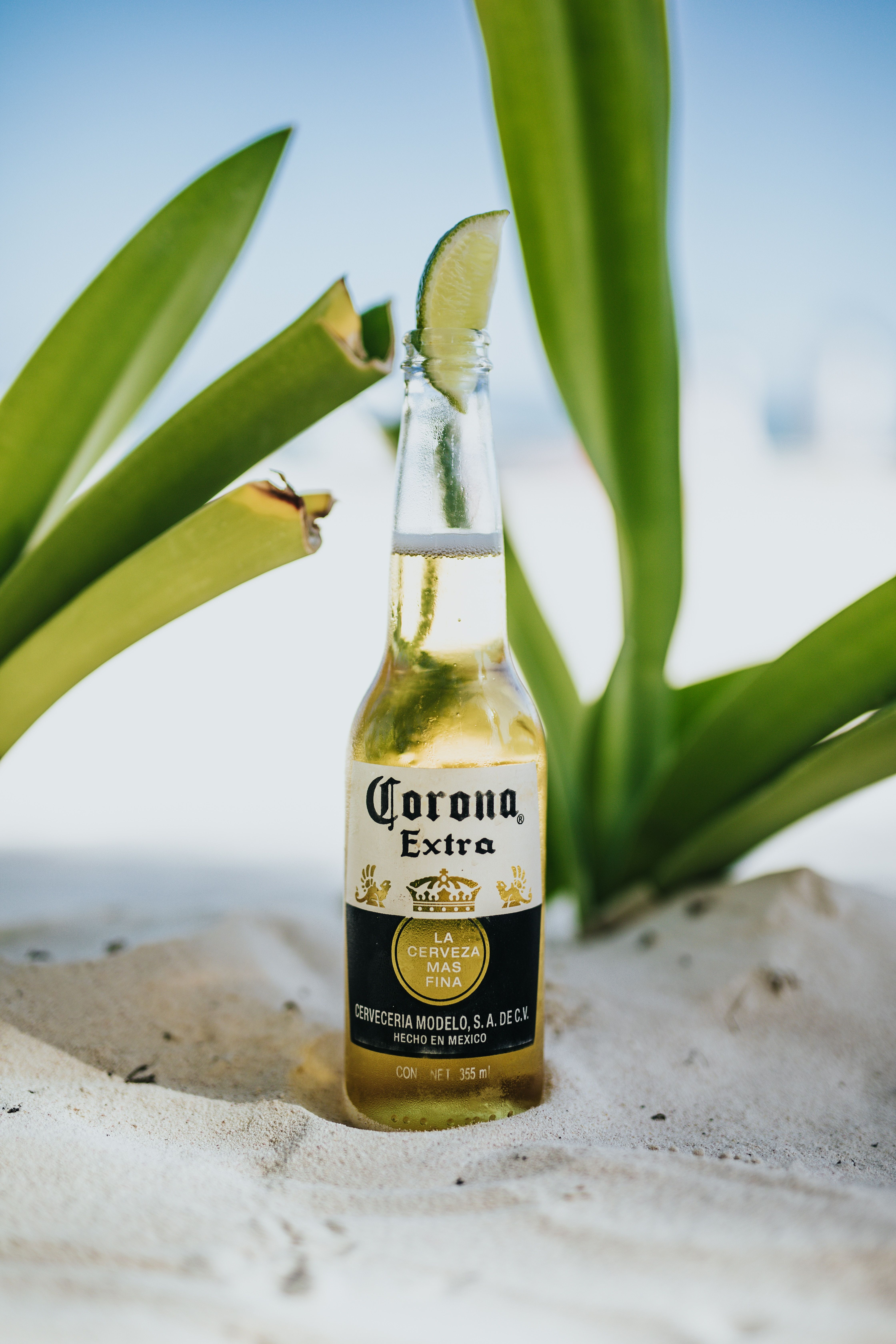 Corona beer top with lime canon canon eos 5d mark iv