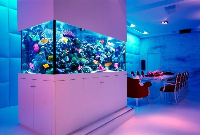 Design Aquarium Kast : Here i have a collection of 22 beautiful interiors with spectacular