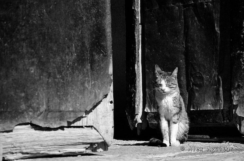 Gato Asoleandose