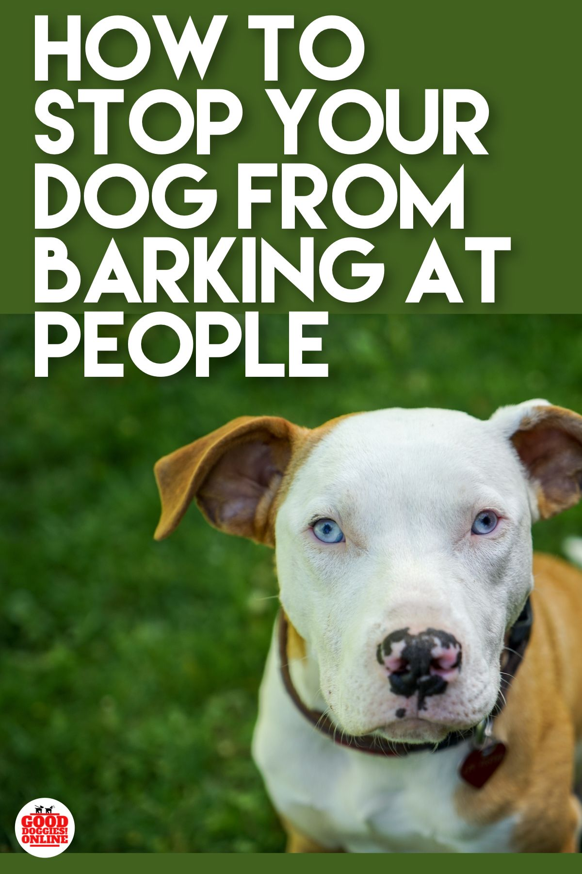 Tips to Get Great Training For Dogs in the Locality