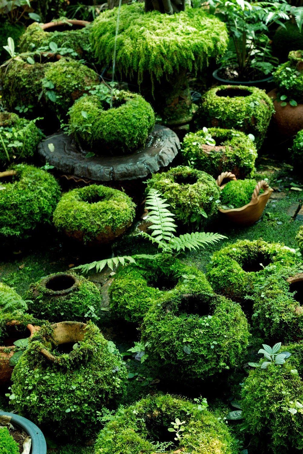 Make DIY Moss Covered Pots With Living Paint is part of Garden projects, Moss garden, Garden design, Moss paint, Cottage garden, Garden landscaping - Want to make some DIY Mossy Pots with us  It's a pretty easy project, but very rewarding in a lush, green kind of way  We're going to show you how to make living moss paint, and how to apply this living paint to terra cotta pots or garden ornaments, that will grow over time to become lush, verdant little ecosystems  like a living piece of art!
