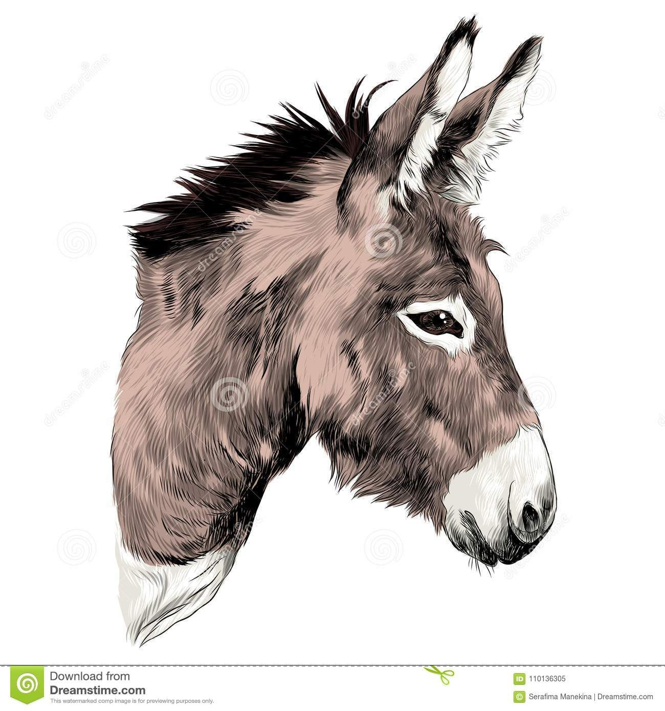 donkey drawing Google Search (With images) Donkey