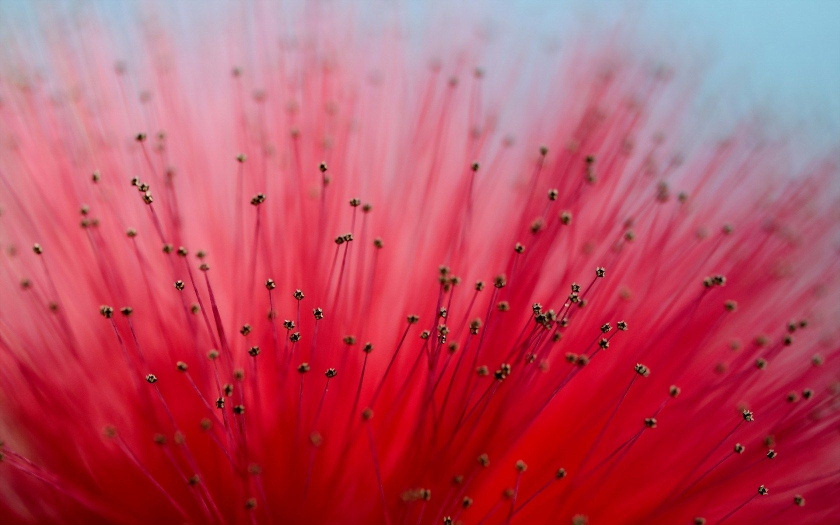 closeup flower macro Illustrations Posters Pinterest