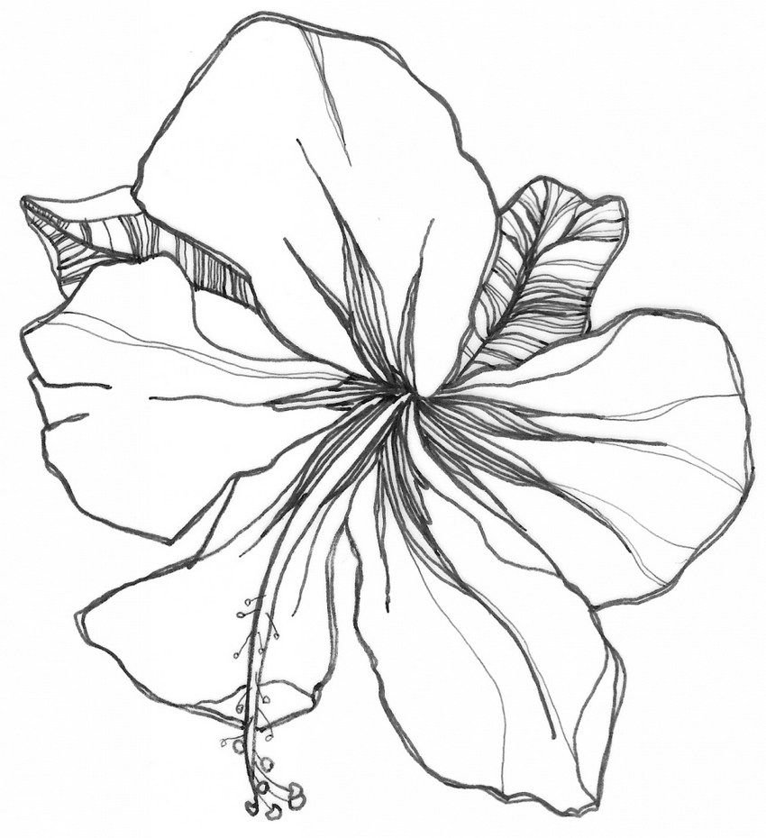 Hibiscus Flower Coloring Books To Print Flower Coloring Pages