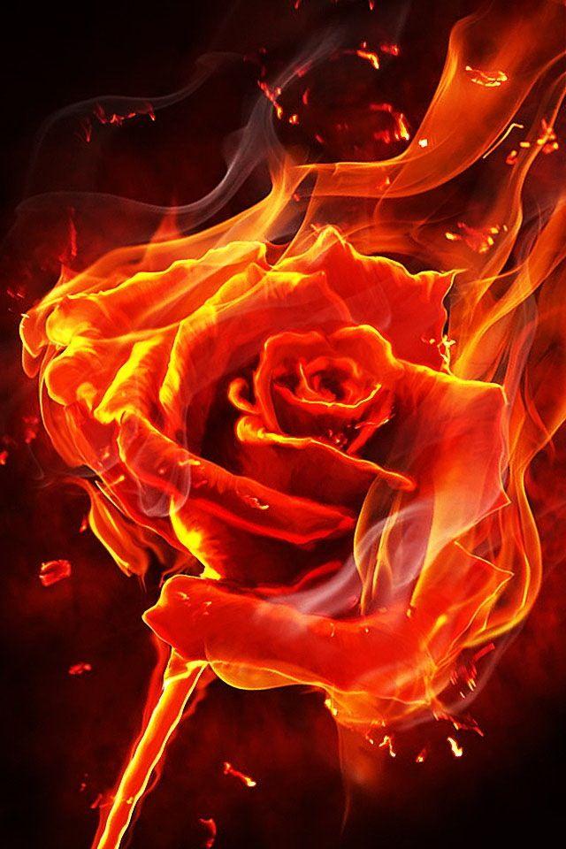 Love Is Like Fire Rose On Fire Fire Art Flame Art