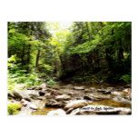 River in the Wood Postcard  River in the Wood Postcard  $1.10  by AlexeWorld   More Designs http://bit.ly/2g4mwV2 #zazzle