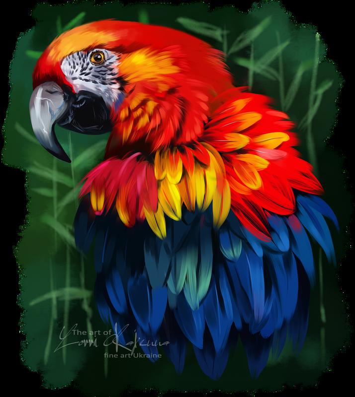 Фотография   Рисунок птиц, Рисунки животных, Фотографии