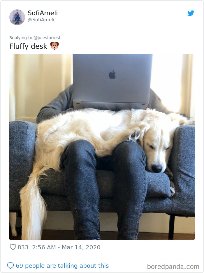 People Sick Of Seeing Glamorous Workspace Setups Share Their Reality Of Working From Home 30 Pics In 2020 Work Space Setup Telework