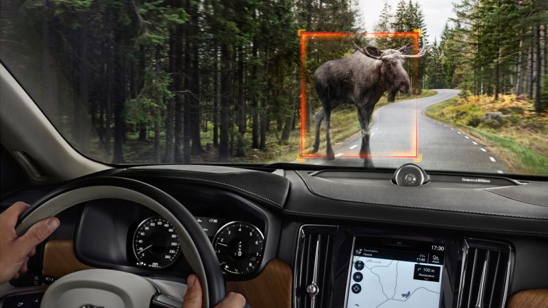 Volvo Is Adding 'Large Animal Detection' to Cars Because