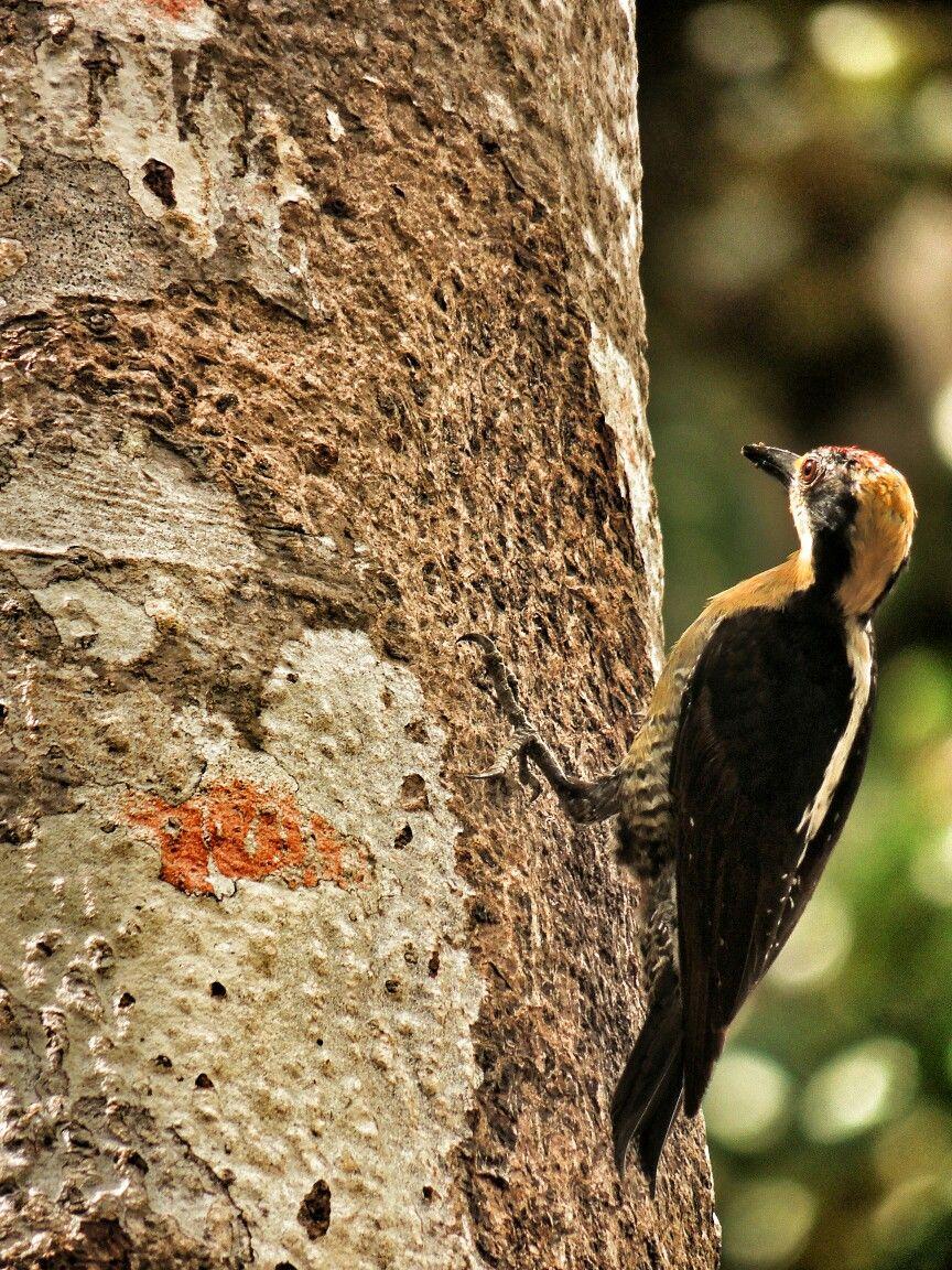 Naturaleza animales aves