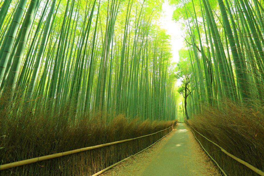 「嵐山」の画像検索結果