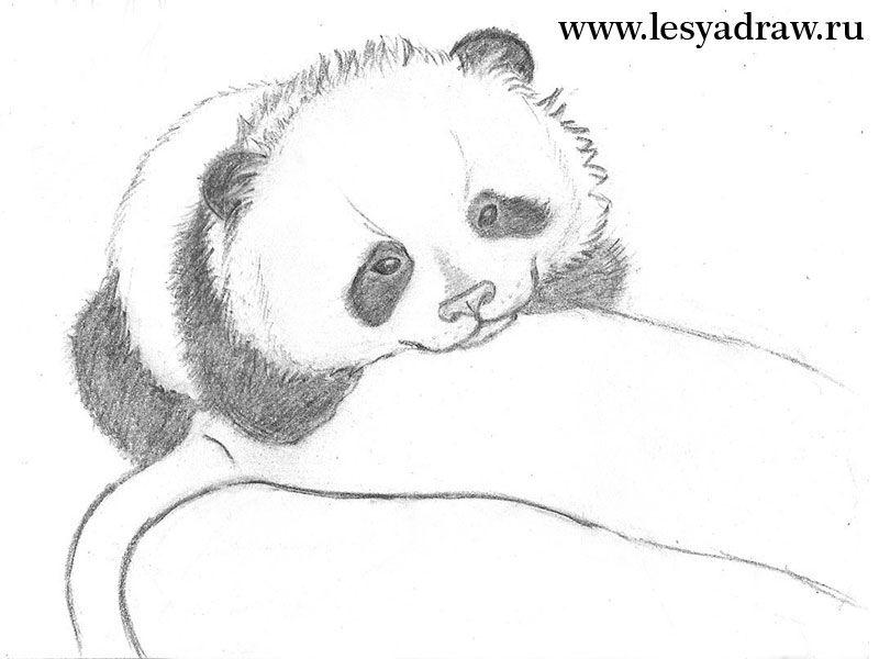 wenn sie einen panda zeichnen lernen dann sind sie genau