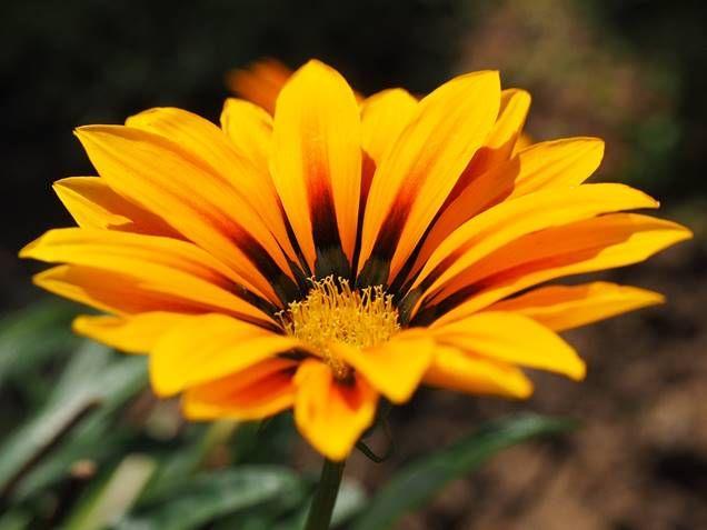 5 plantas que toleran el sol directo jardiner a for Jardineria exterior con guijarros