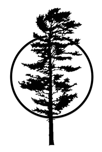 White Pine Pine Tree Tattoo Pine Tree Silhouette Pine Tree Drawing