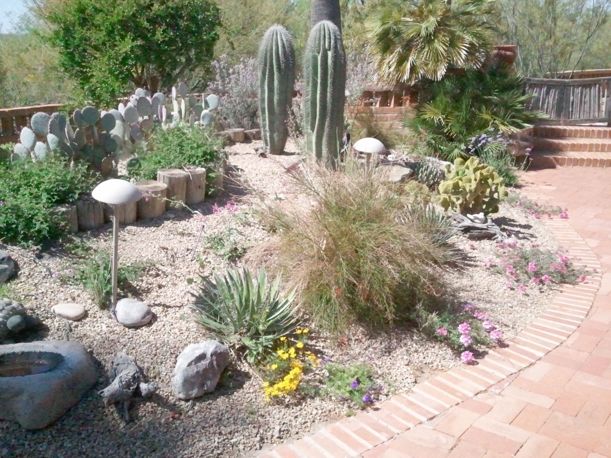 Front Yard Landscape Amazing Desert Landscaping Ideas For Front ...