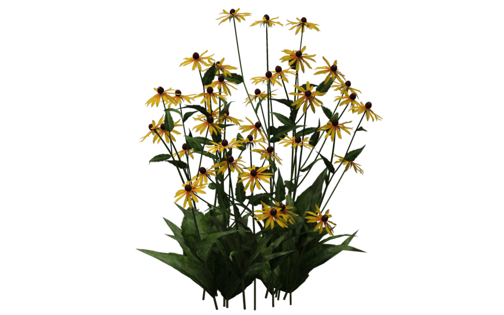 Black Eyed Susan 01 By Wolverine041269 On Deviantart Black Eyed Susan Plants Flowers