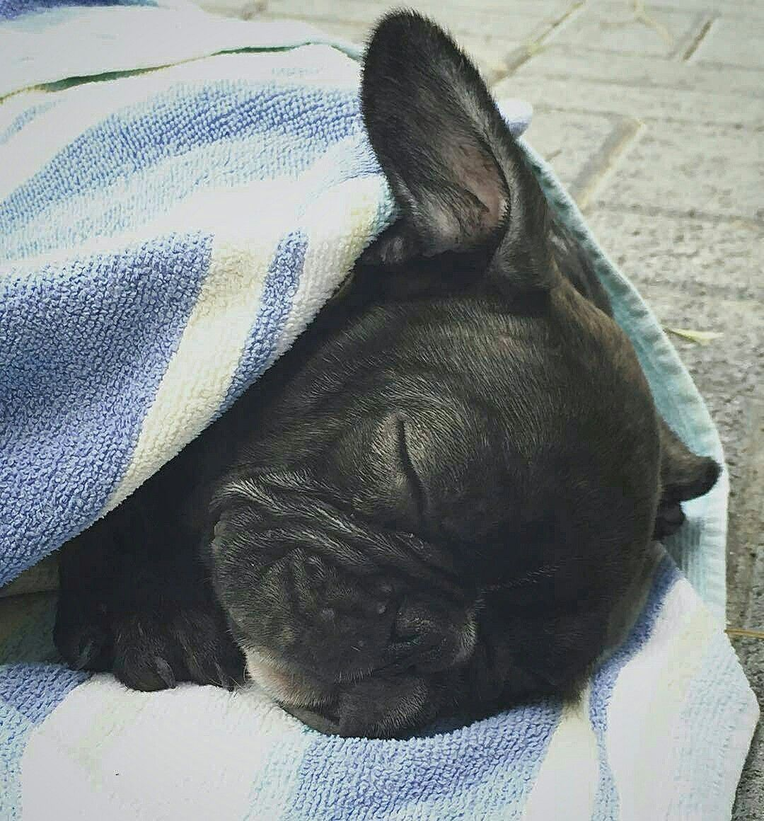 Good Morning And Happy New Year From Coconut The French Bulldog