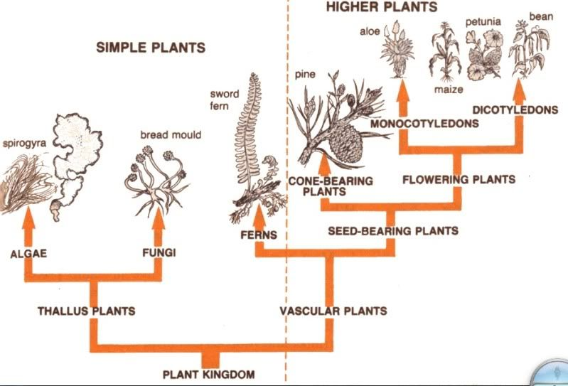 Plant Kingdom Classification