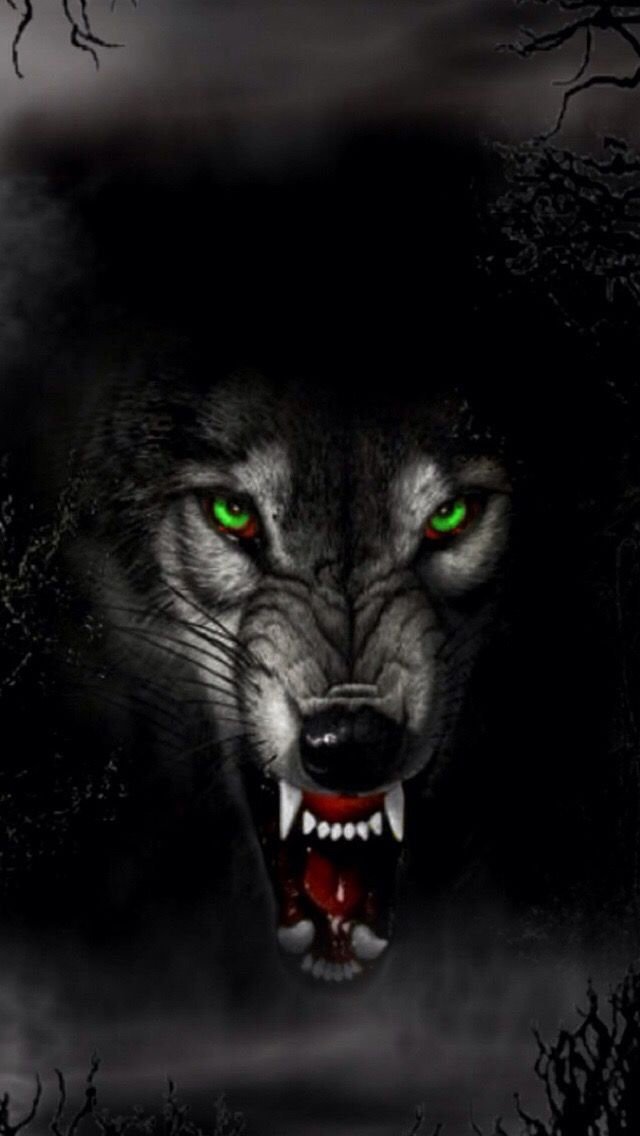 Pin By Redrum On Wolves Pinterest Wolf Animals And Wolf Wallpaper