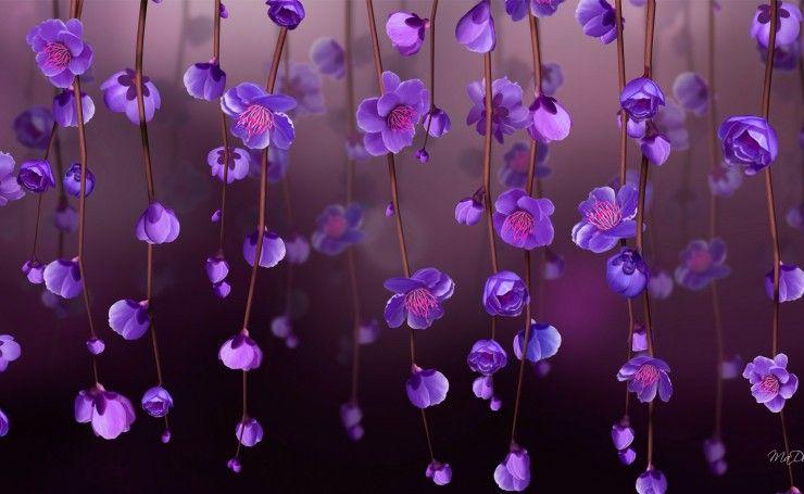 Обои на рабочий стол Свисающие фиолетовые цветы, картинки ...